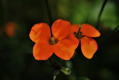 Vysaďte si záhradu, ktorá monitoruje a čistí ovzdušie